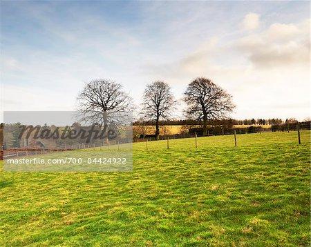 Hilly Farmland, Cotswolds, Gloucestershire, England, United Kingdom