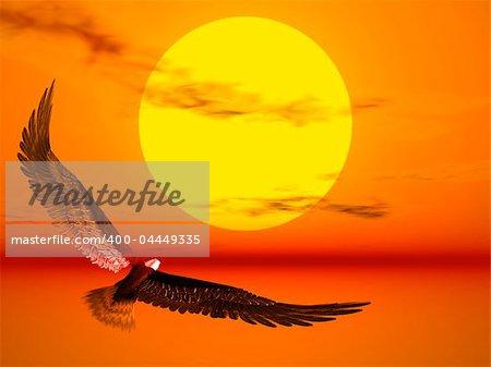 An eagle flight against a very colourful sunset
