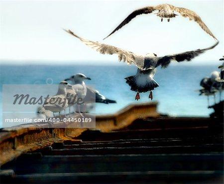 The seagulls at coast of Black sea