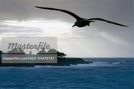 Sea gull over the ocean