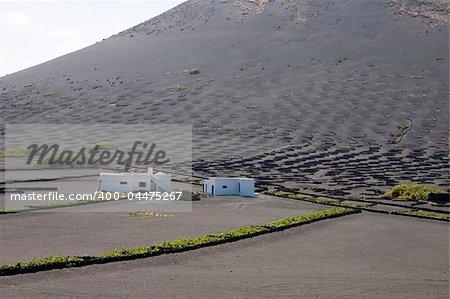 Vignoble typique de La Geria, Lanzarote, îles Canaries, Espagne