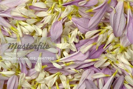 Fond de pétales de fleurs colorées