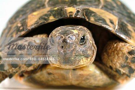 closeup on a turtles face