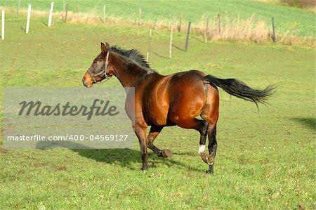 Horse is running on green grass
