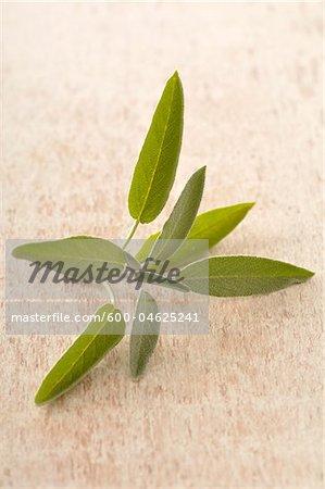 Gros plan des feuilles de sauge