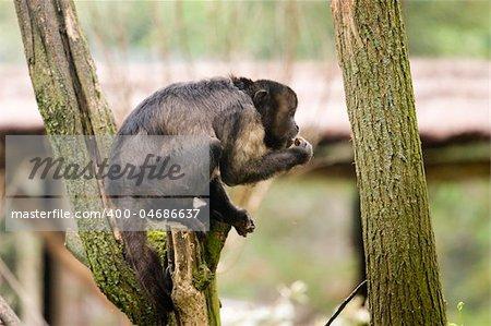 Photo of a wild monkey on a three