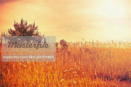 Bright summer landscape: sunny field in orange tones