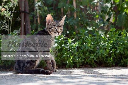 Small cat in green garden detail