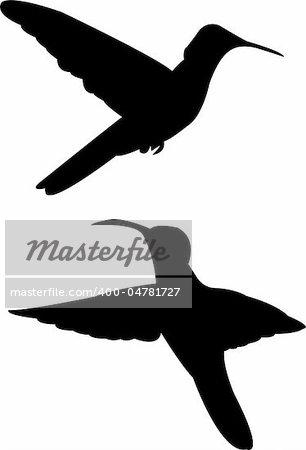 humming bird silhouette - vector