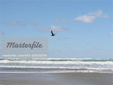 Ninety Mile Beach, North Island, New Zealand