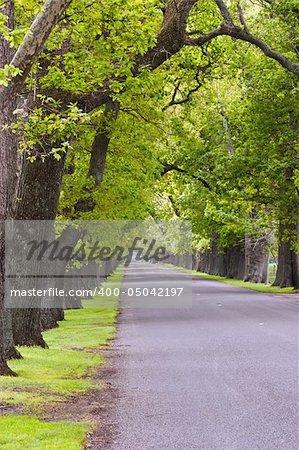 An oak lined road in Hastings, Hawke's Bay, New Zealand.