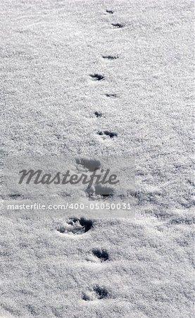 Winter path on snow