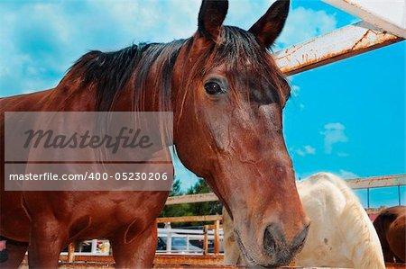 closeup of a horse on a farm on the blue sky