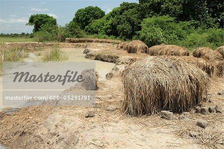 Soroti Wetlands / Swamps - Uganda - The Pearl of Africa