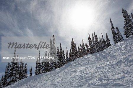 Pistes de ski et Snow-Covered Trees, mont Whistler, Whistler, Colombie Britannique, Canada