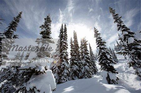 Couverte de neige, arbres, montagne de Whistler, Whistler, Colombie-Britannique, Canada