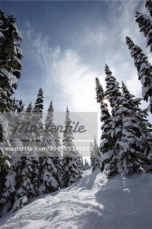 Snow Covered Trees, Whistler Mountain, Whistler, British Columbia, Canada