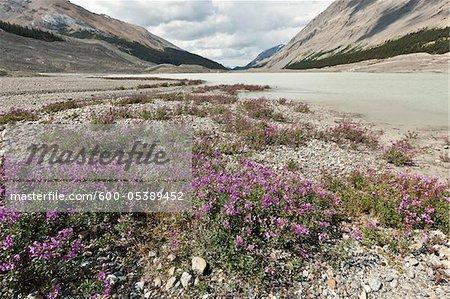 Columbia Icefield, Banff National Park and Jasper National Park, Alberta, Canada