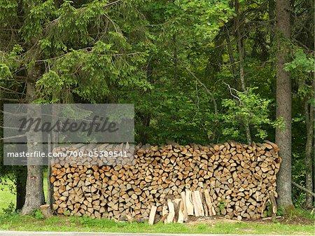 Pile de bois entre les arbres