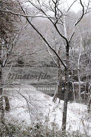 Japan, Hakone, snowy landscape