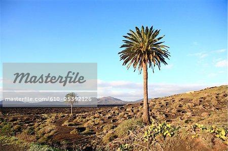 Espagne, Iles Canaries, Lanzarote, le Parc National de Timanfaya