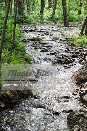 Cours d'eau coulant à travers bois