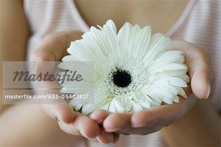 Femme tenant gerbera daisy, recadrée
