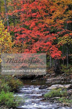 Bäume in den Farben des Herbstes mit Creek, Pennsylvania, USA