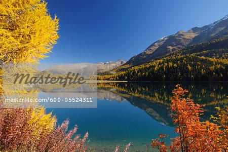 Autumn andscape, Lake Silvaplana, Engadin, Grisons, Switzerland