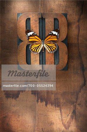 Butterfly on Wood Letterpress