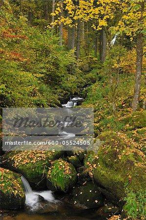 Forest Stream, Triberg im Schwarzwald, Forêt-Noire-Baar, forêt noire, Bade-Wurtemberg, Allemagne