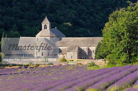 Abbaye Senanque and Lavender Field, Vaucluse, Provence, Alpes-de-Haute-Provence, Provence-Alpes-Cote d'Azur, France