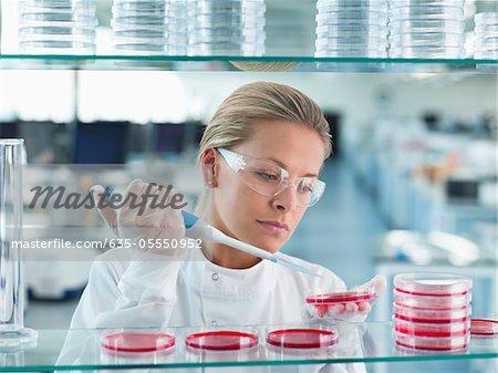 Scientist putting liquid in petri dishes in lab