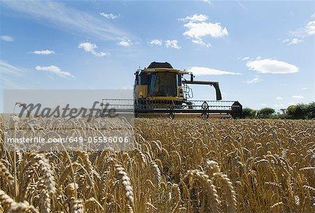 Batteuse de blé de la récolte