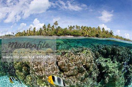 Plus de/moins de récif corallien