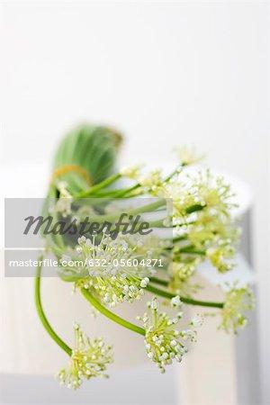 Fleurs d'ail, utilisés comme ingrédient de cuisine