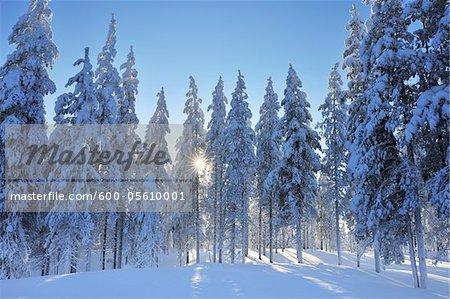 Kuusamo, Ostrobotnie du Nord, la Province d'Oulu, Finlande