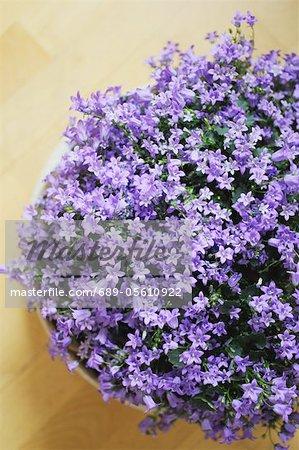 Fleur fleur lila