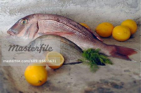 Deux poissons et citrons