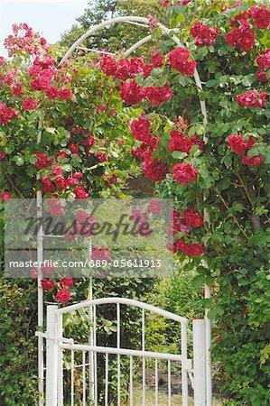 Rose arch at garden door