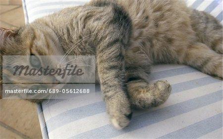 Tabby cat lying on cushion