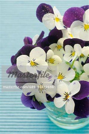 Weiß und lila Stiefmütterchen