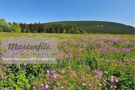 Prairies, Parc National du Harz, Harz, Sankt Andreasberg, Basse-Saxe, Allemagne