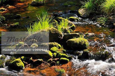 Cours d'eau forestier, lac Oderteich, Sankt Andreasberg, Goslar, Harz, Basse-Saxe, Allemagne