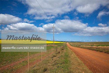 Champs de canola le long de la route dans les Overberg District, Province du Western Cape, en Afrique du Sud