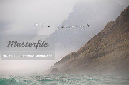 Troupeau de noirs cormorans (Phalacrocorax carbo) volant à côté de la montagne au-dessus la mer agitée de l'aigue-marine, falaises de granit se fanant dans la brume, la plage de Noordhoek, Cape Town, Western Cape, Afrique du Sud