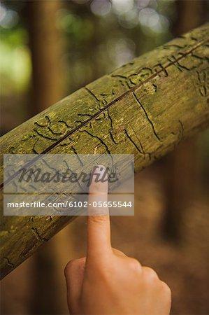 Un doigt pointé sur un treetrunk.