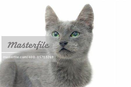 Grey kitten with green eyes