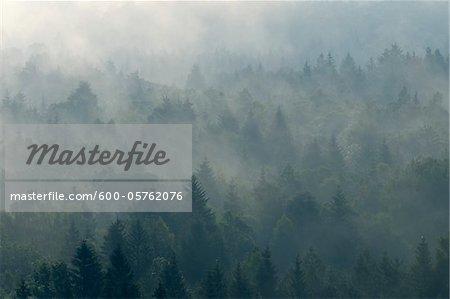 Morgennebel im Wald, Isartal, Wolfratshausen, Upper Bavaria, Bayern, Deutschland