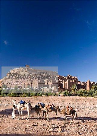 Chameaux et chamelier contre la célèbre kasbah d'Ait Benhaddou, utilisé comme toile de fond à de nombreux films hollywoodiens, Ait Benhaddou, patrimoine mondial de l'UNESCO, Ouarzazate, Maroc, Afrique du Nord, Afrique